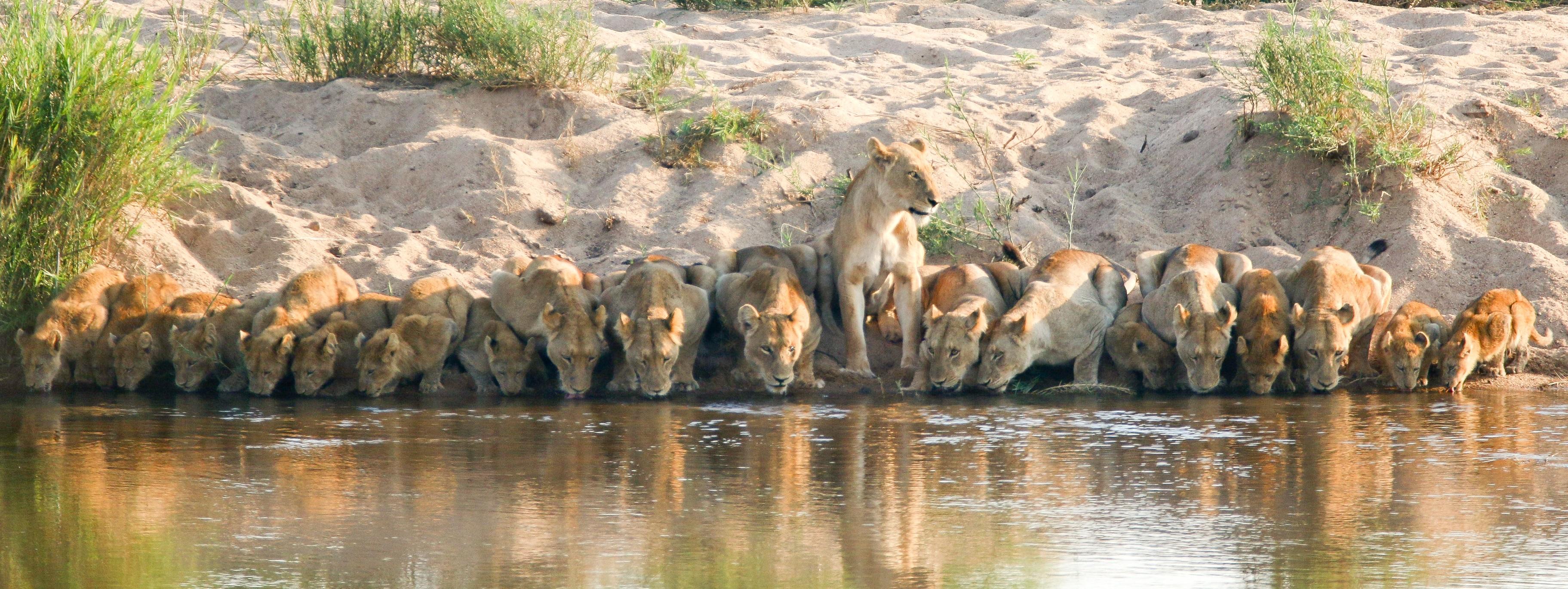 טיול  מאורגן לדרום אפריקה - במסלול מושלם מכף התקווה הטובה ועד שמורת הקרוגר פארק